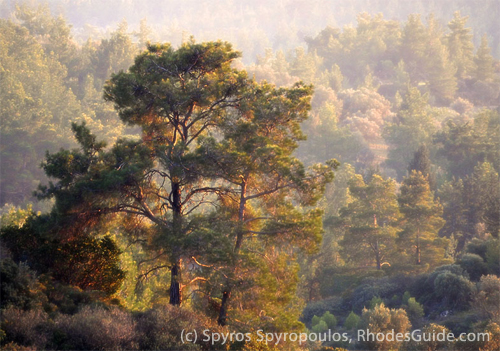 Rhodes Greece Forest Winter