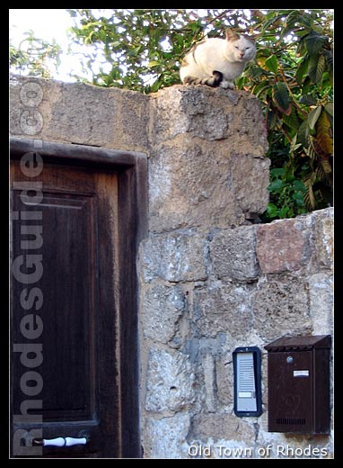 An alley cat in the Old Town of Rhodes