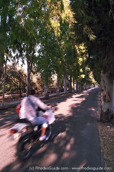 Kolymbia, the eucalyptus road, Rhodes, Greece