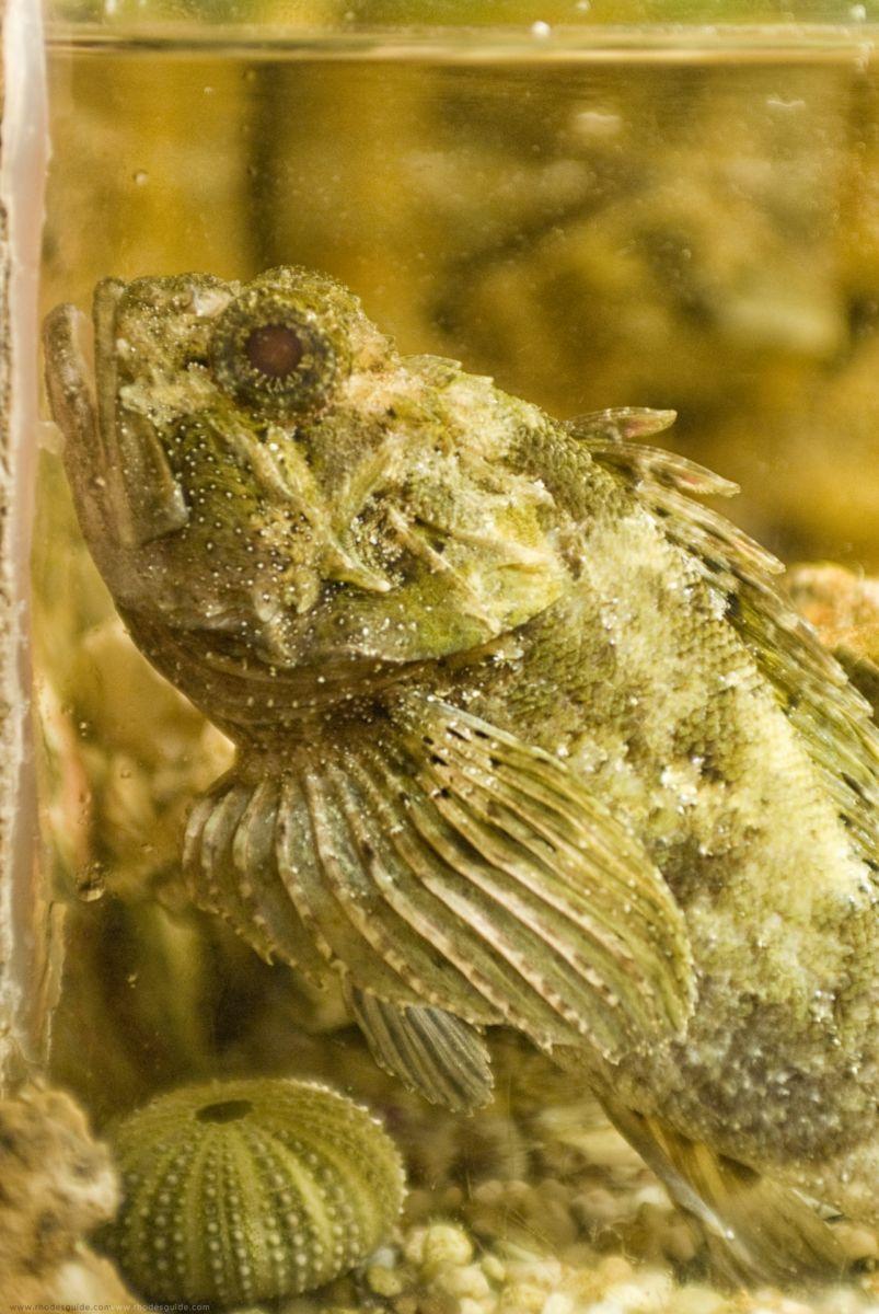 Rhodes Aquarium © Rhodes Guide / RhodesGuide.com