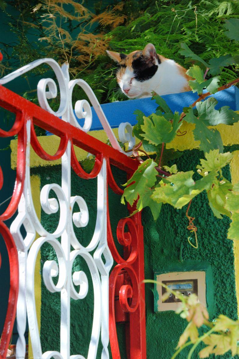 Koskinou © Rhodes Guide / RhodesGuide.com