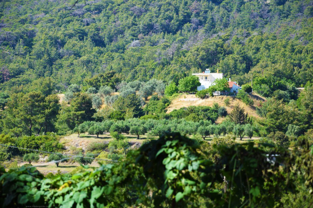 Eleousa © Rhodes Guide / RhodesGuide.com