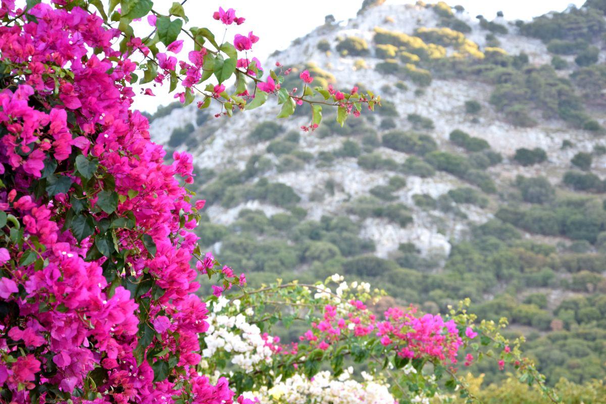 Salakos © Rhodes Guide / RhodesGuide.com