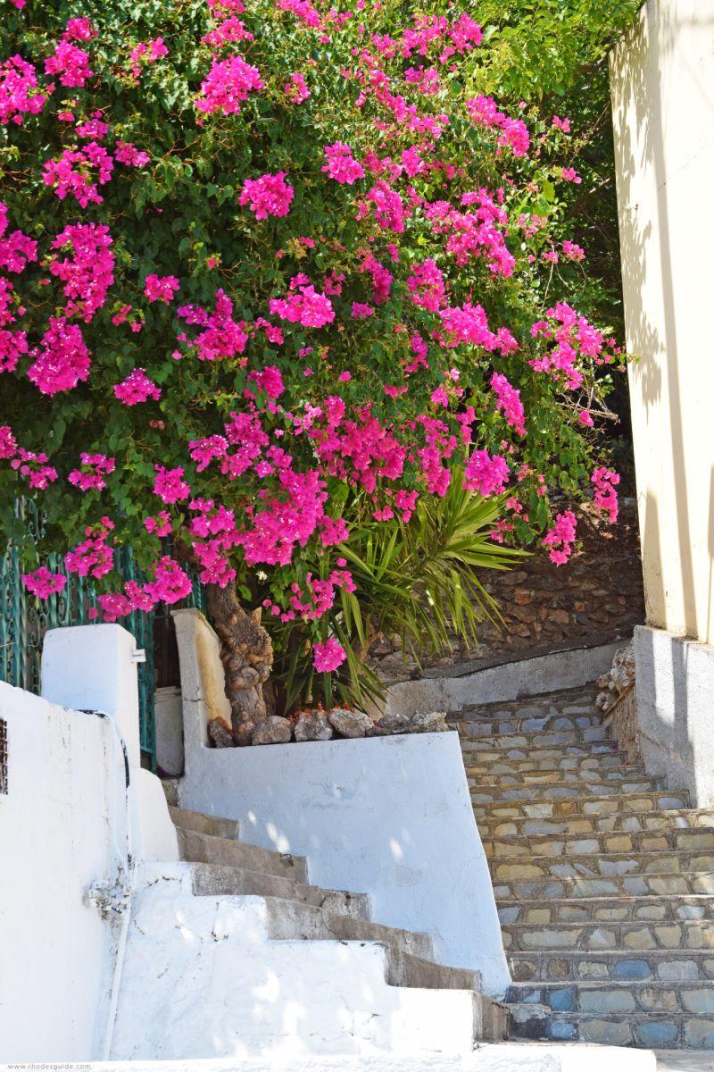 Platania © Rhodes Guide / RhodesGuide.com